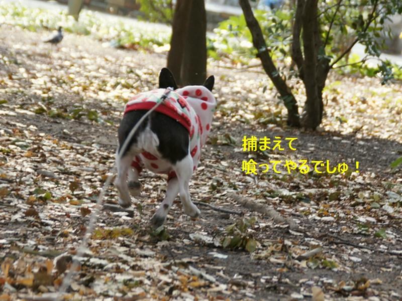 10_20120206211618.jpg