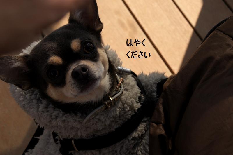 10_20120210084432.jpg