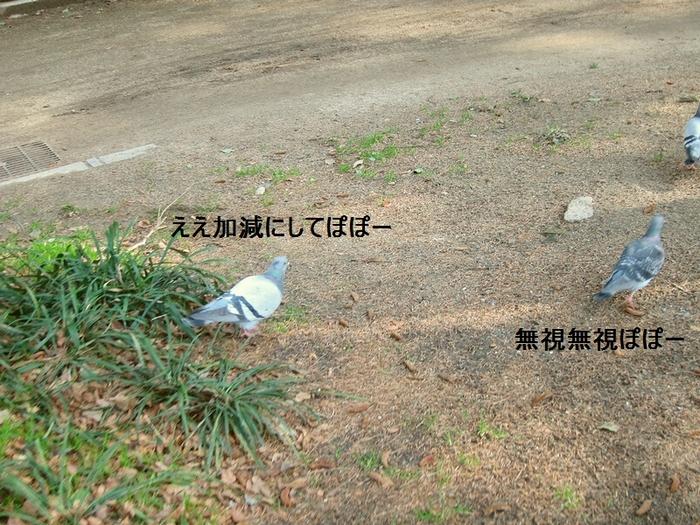 10_20120304172422.jpg