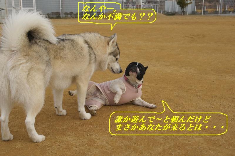 11_20110119163158.jpg