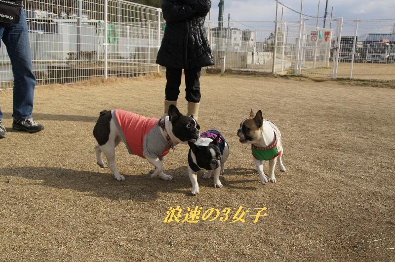 11_20110127121335.jpg