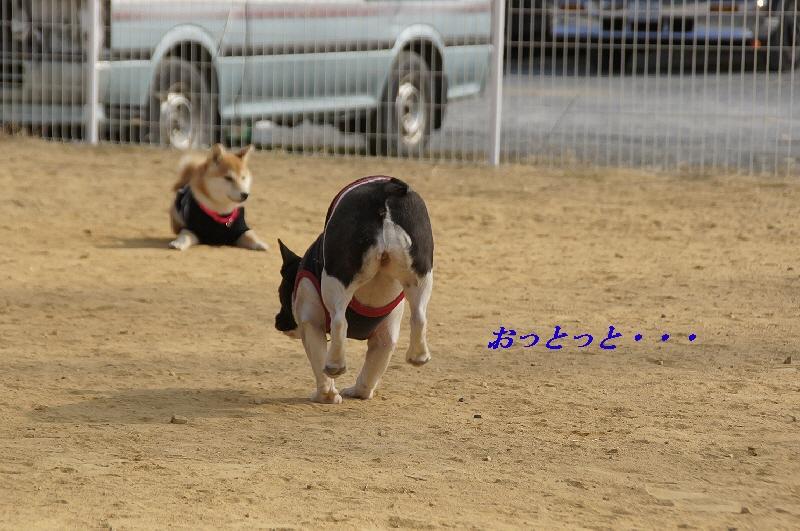 11_20110207150144.jpg