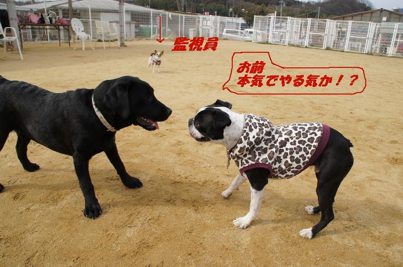 11_20110222173321.jpg