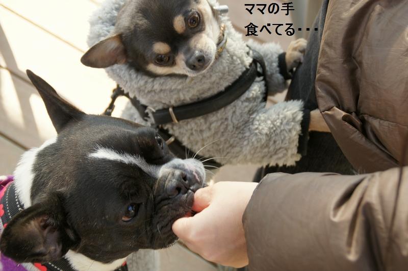11_20120210084432.jpg