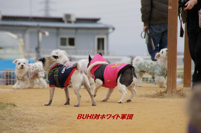 12_20101201100743.jpg