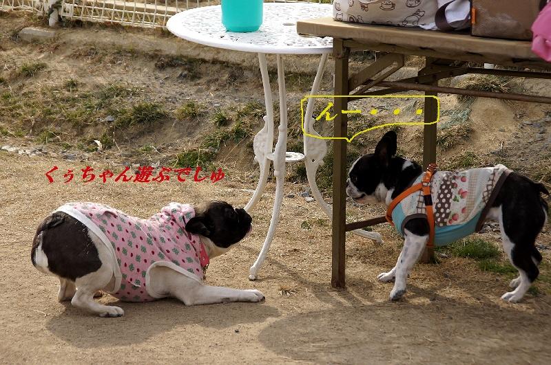 12_20110201104933.jpg
