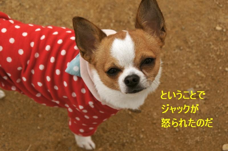 12_20120310083137.jpg