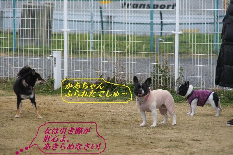 13_20110104081029.jpg