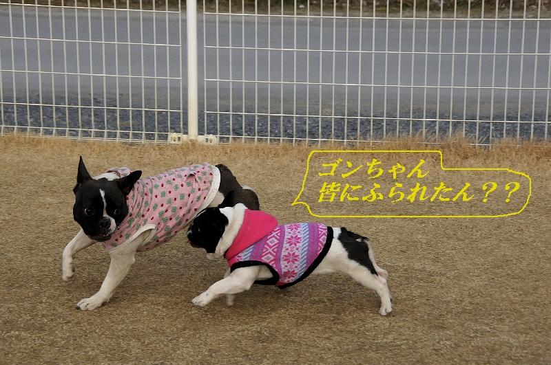 13_20110201104932.jpg