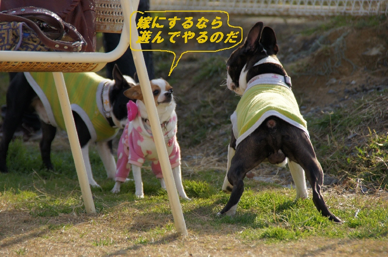 16_20101230093138.jpg