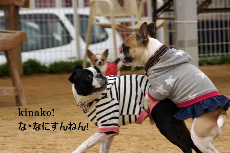 16_20120310083716.jpg