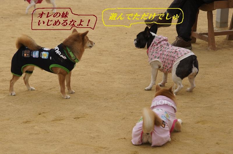 18_20110201105004.jpg