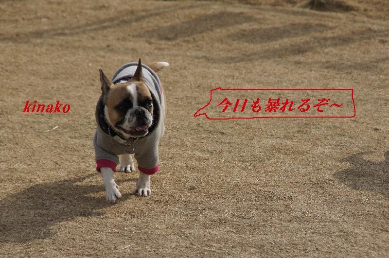1_20110201104820.jpg