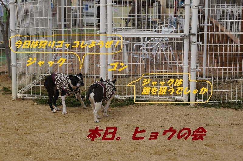 1_20110222173211.jpg