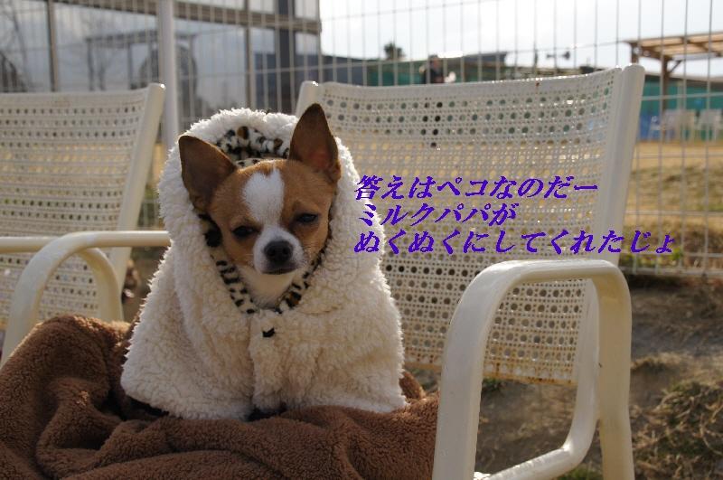 21_20110127121509.jpg