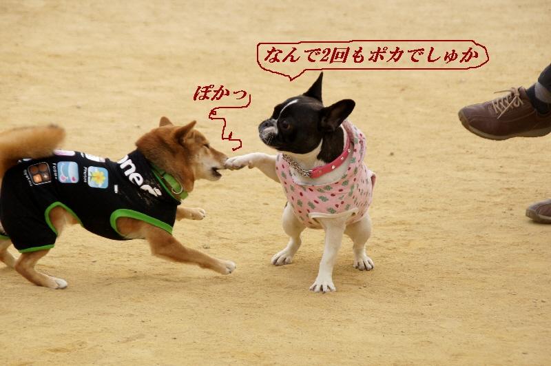 22_20110201105050.jpg