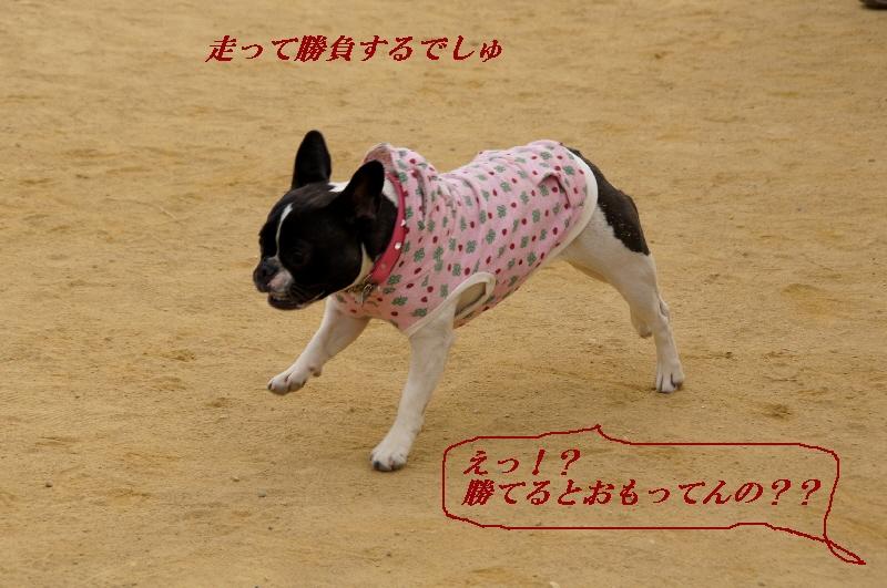 23_20110201105049.jpg