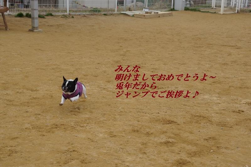 2_20110104080922.jpg
