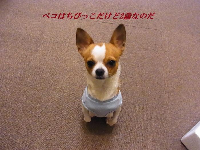 2_20110113190444.jpg