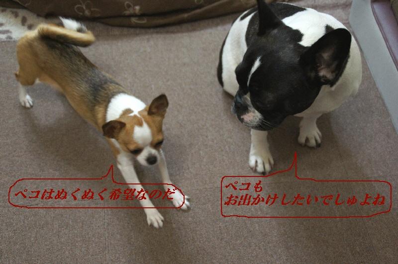 2_20110119163050.jpg