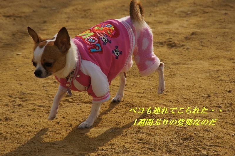 3_20110119163050.jpg