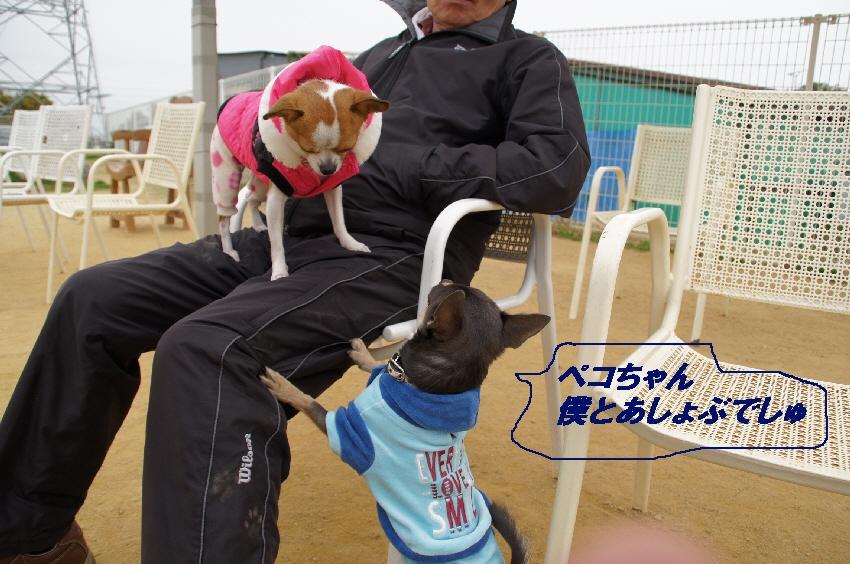 4_20101201100614.jpg