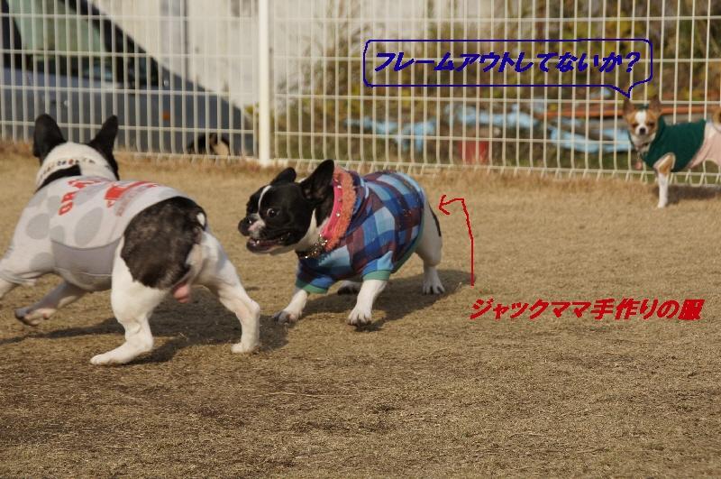 4_20101210083415.jpg