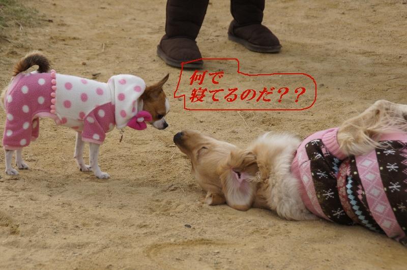 4_20110127121301.jpg