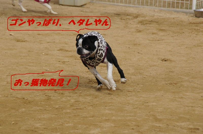 4_20110222173245.jpg