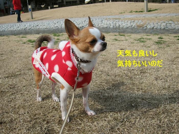 5_20120304171522.jpg