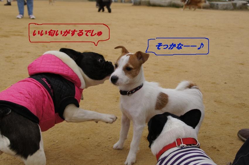 6_20101201100655.jpg