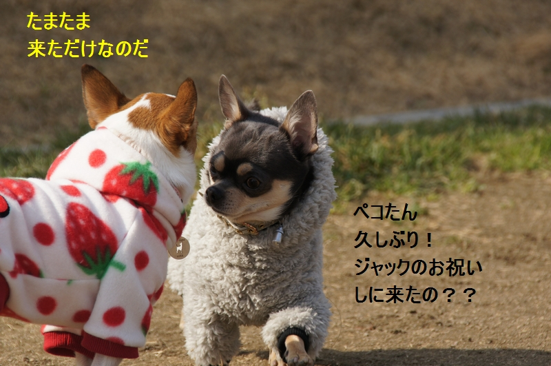 6_20120210084018.jpg