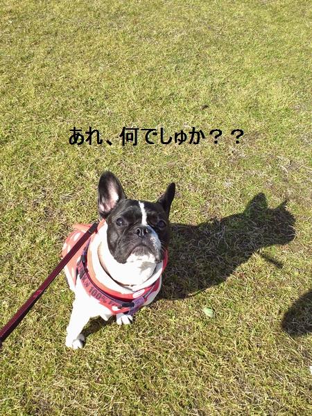 6_20120222144940.jpg