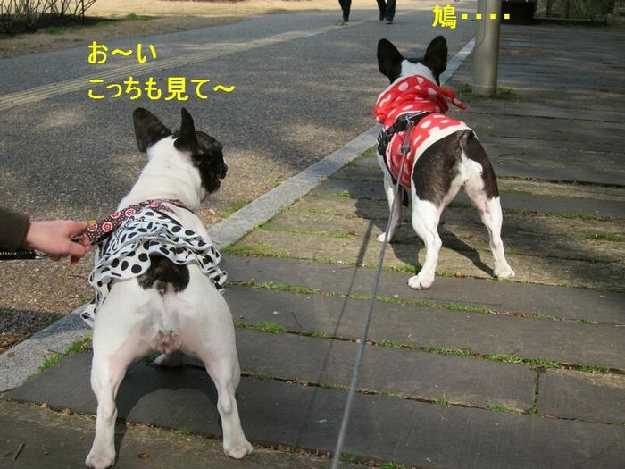 7_20120304172424.jpg