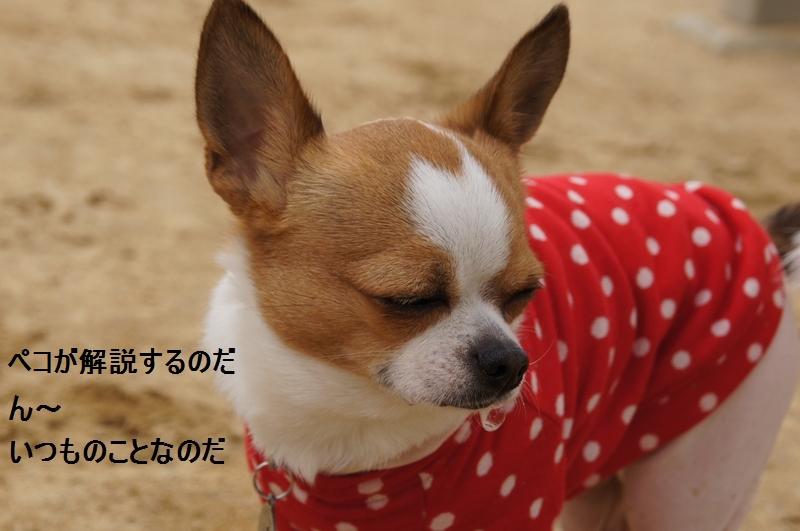7_20120310082804.jpg