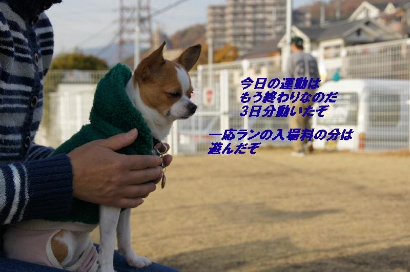 9_20101210083500.jpg