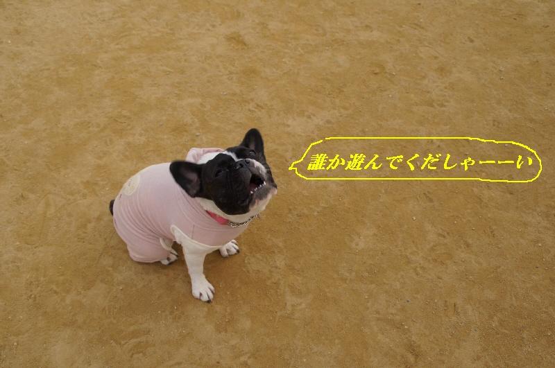 9_20110119163122.jpg