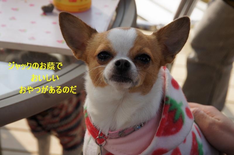 9_20120210084432.jpg