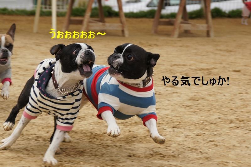 9_20120310083138.jpg