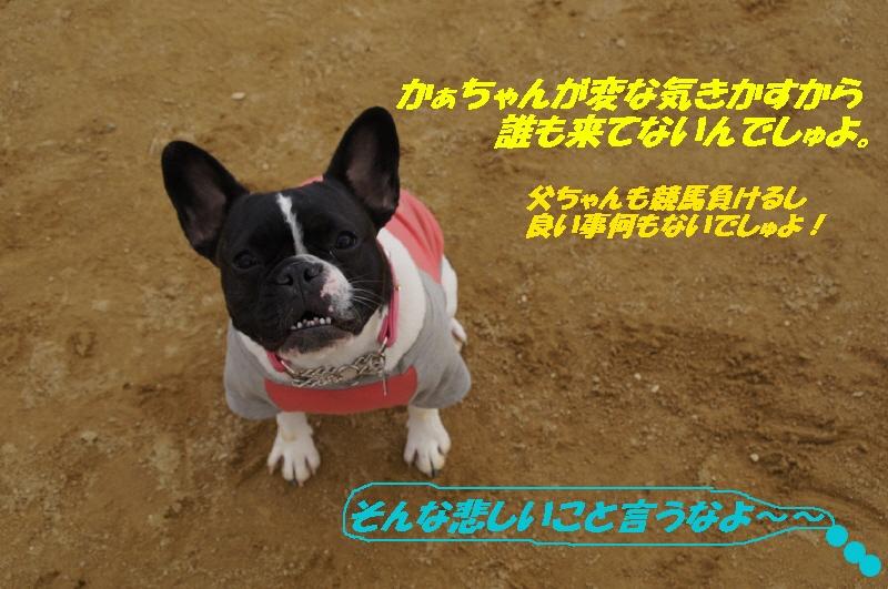 a_20110216205801.jpg