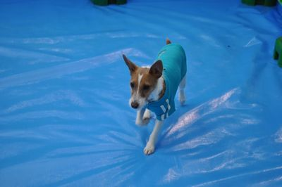 2010.12.23 Dogs SHIPPO Festa 004