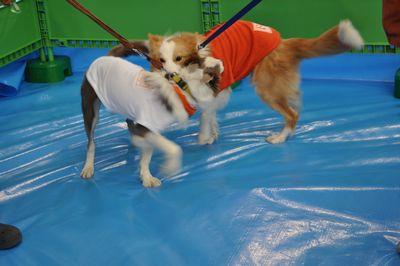 2010.12.23 Dogs SHIPPO Festa 020