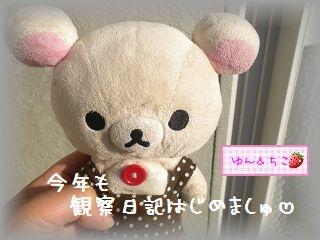 ちこちゃんの観察日記2012★1★今年も観察するよ♪-1
