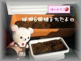 ちこちゃんの観察日記2012★1★今年も観察するよ♪-5