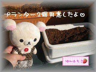 ちこちゃんの観察日記2012★1★今年も観察するよ♪-3