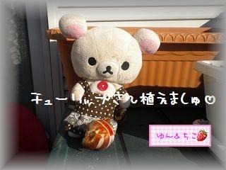 ちこちゃんの観察日記2012★1★今年も観察するよ♪-4