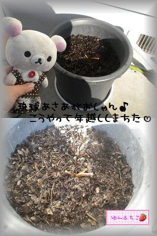 ちこちゃんの観察日記2012★1★今年も観察するよ♪-2