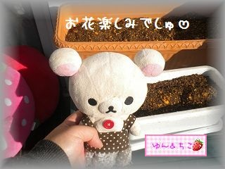 ちこちゃんの観察日記2012★1★今年も観察するよ♪-6