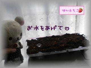 ちこちゃんの観察2012★2★上手くできるかな??-3