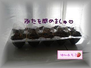 ちこちゃんの観察2012★2★上手くできるかな??-4